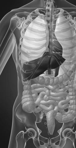 Les troubles digestifs et l'ostéopathie