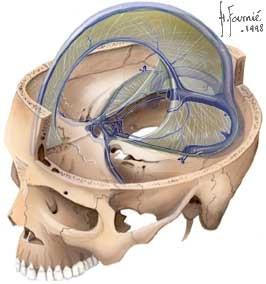 Les douleurs du crâne